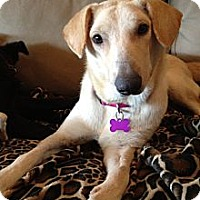 Adopt A Pet :: Eleanor - Richmond, VA