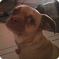 Adopt A Pet :: D.O. Gee - Gilbert, AZ