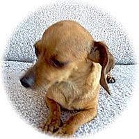 Adopt A Pet :: Ariel - Tucson, AZ