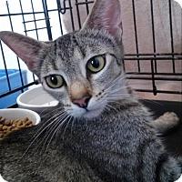 Adopt A Pet :: Imogen - Sacramento, CA