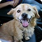 Adopt A Pet :: Fabulous Fiona