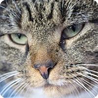 Adopt A Pet :: Mia - Barn Cat Option - Sparta, NJ