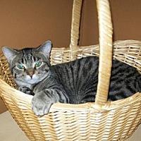 Adopt A Pet :: Jazmin - Kohler, WI