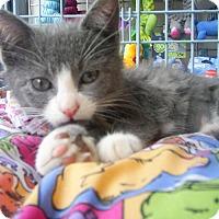 Adopt A Pet :: AJA - Ridgewood, NY