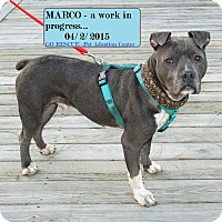 Adopt A Pet :: Marco - Virginia Beach, VA
