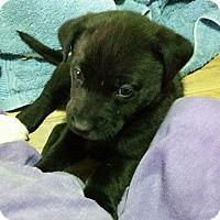 Adopt A Pet :: Baby Jean - Saskatoon, SK