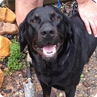 Adopt A Pet :: Dan - Blue Ridge, GA