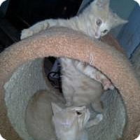 Adopt A Pet :: Lizzie and Lucas - Mission Viejo, CA