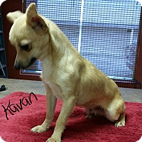 Adopt A Pet :: Kavan - Washington, DC