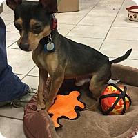 Adopt A Pet :: Coolio - Phoenix, AZ