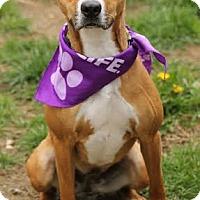 Adopt A Pet :: Zoey - Camden, DE