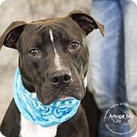 Adopt A Pet :: Fin - Bradenton, FL