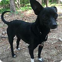 Adopt A Pet :: Peabody - Allentown, PA
