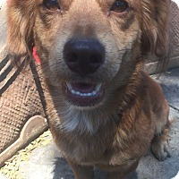 Adopt A Pet :: Monty - Santa Ana, CA
