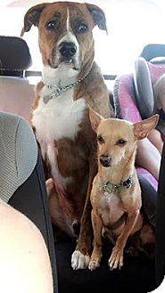Boxer Mix Dog for adoption in Salem, Oregon - Jax