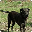 Adopt A Pet :: Beauregard