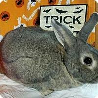 Adopt A Pet :: Lizzie - Williston, FL