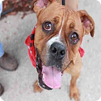 Adopt A Pet :: JOJO - Chicago Ridge, IL