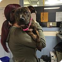 Adopt A Pet :: Minnie - East McKeesport, PA