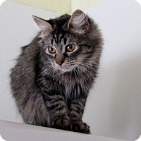Adopt A Pet :: Ebony - Grinnell, IA