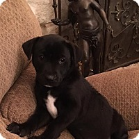 Adopt A Pet :: Triton - Kaufman, TX