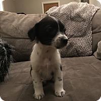 Adopt A Pet :: Jayden - Hainesville, IL