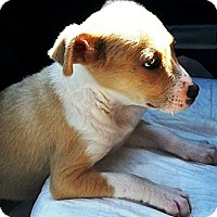 Adopt A Pet :: Trixie - Vista, CA