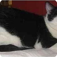 Adopt A Pet :: Mei-Mei - Jenkintown, PA