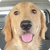 Adopt A Pet :: Lola - Cheshire, CT
