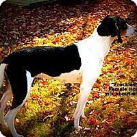Adopt A Pet :: Freckles - Gadsden, AL