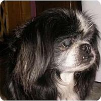 Adopt A Pet :: Hudson-VA - Mays Landing, NJ