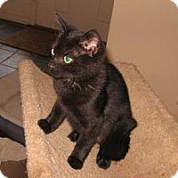 Adopt A Pet :: Obi - Colmar, PA