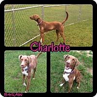 Adopt A Pet :: Charloette - El Campo, TX
