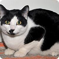 Adopt A Pet :: Mo - Medina, OH
