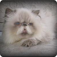 Adopt A Pet :: Sally - Gilbert, AZ