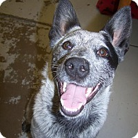 Adopt A Pet :: Smokey - Logan, UT