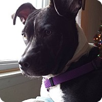 Adopt A Pet :: Cleopatra - Toms River, NJ