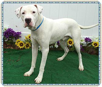 SATELLITE   Adopted Dog   581648   Marietta, GA   Great ...