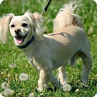 Adopt A Pet :: Weber - Pleasant Plain, OH