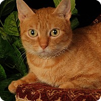 Adopt A Pet :: Butters - mishawaka, IN