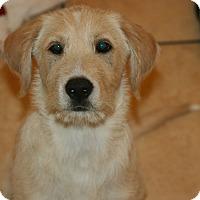 Adopt A Pet :: Puppies! - Canoga Park, CA