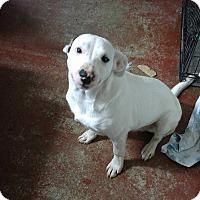 Adopt A Pet :: Spuds - Jarrell, TX