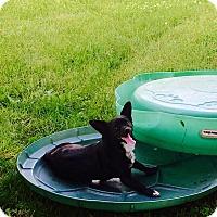 Adopt A Pet :: Shelly - Tomah, WI