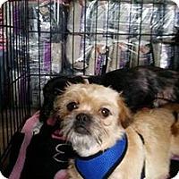 Adopt A Pet :: Uma- Adoption Pending - Fairfield, OH