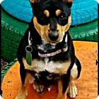 Adopt A Pet :: Ace - Johnson City, TX