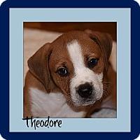 Adopt A Pet :: Theodore - Memphis, TN