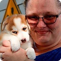 Adopt A Pet :: Tiana - Grand Rapids, MI