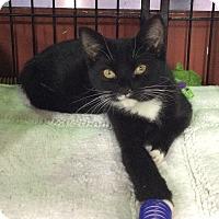 Adopt A Pet :: Chase - Breinigsville, PA