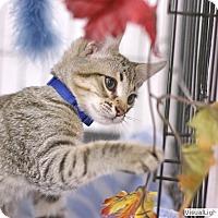 Adopt A Pet :: Moe - Westchester, CA