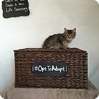 Adopt A Pet :: Maggie - Mosheim, TN